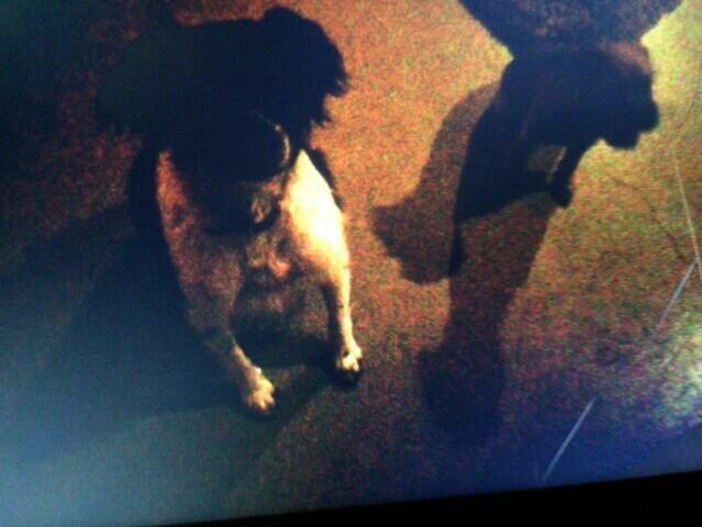 fotoopdracht: hond op foto